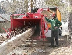 Tree Removal Reviews In Orange County